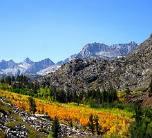 Fall Colors In The Sierras by marilyn diaz