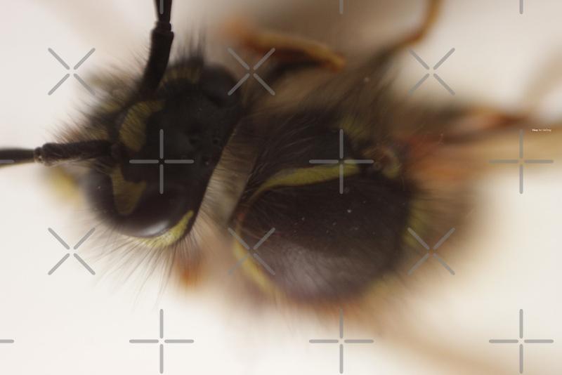 WASP by inkDrop