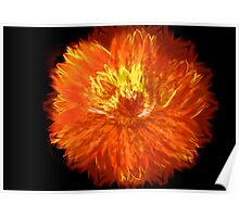 Fire Red Peony Painting Poster