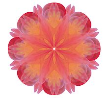Fractal Flower 001 Photographic Print