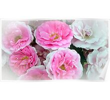 A Bunch of Pink and White Roses Poster