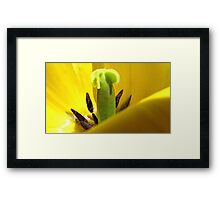 Yellow Tulip Pistil and Stamens - Macro Photography Framed Print