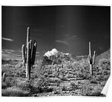 McDowell Sonoran Preserve, Scotsdale Arizona Poster