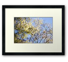 Lightness of Spring Framed Print