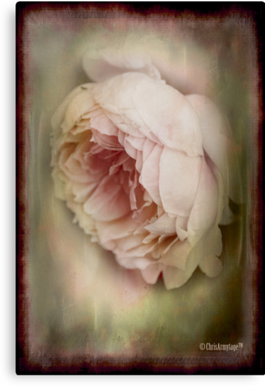 Faded beauty by Chris Armytage™