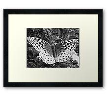Butterfly b&w Framed Print