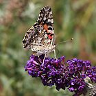 Painted Lady by Jazzy724