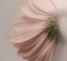 Dream On by Shari Mattox