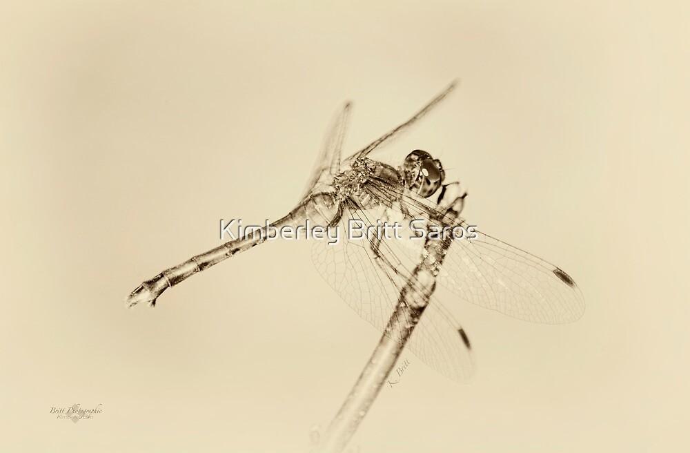 Dragonfly by KBritt