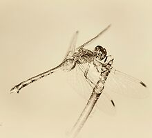 Dragonfly by KBritt