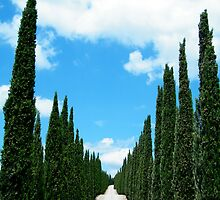 trees... by maxdamian