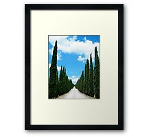 trees... Framed Print