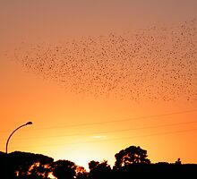migration... by maxdamian