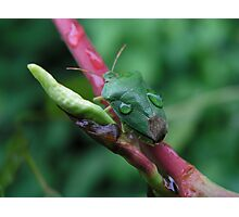 Green Beetle Photographic Print