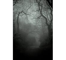 Lacertine Forest Photographic Print