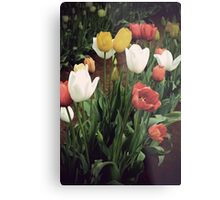 Coloured bunch Metal Print