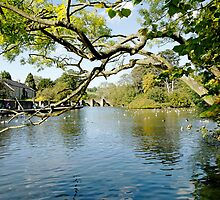 Bakewell Riverside, Through The Branches  by Rod Johnson