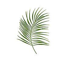 Leaf Print - 1 Photographic Print