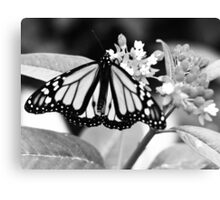 Monarch. Canvas Print