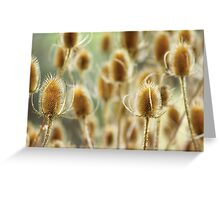 Thistles Greeting Card