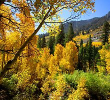 A Branch Of Autumn by marilyn diaz