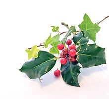 Holly And Ivy by Terri Waters