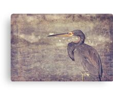Tri Colored Heron Textured Canvas Print