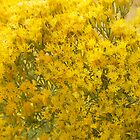 Rabbitbrush by Betty E Duncan  Blue Mountain Blessings Photography