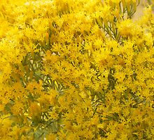 Rabbitbrush by Betty E Duncan © Blue Mountain Blessings Photography