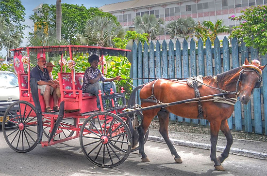 Horse Carriage Tour in Nassau, The Bahamas by 242Digital