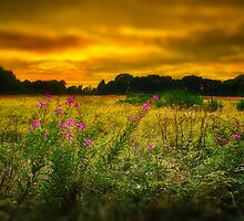 A BARMING SUNSET by Rob  Toombs