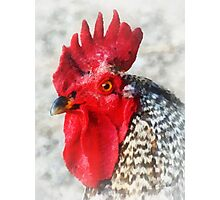 Portrait of a Rooster Photographic Print