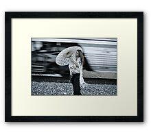 Swift  Framed Print
