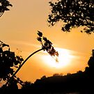 Cow Parsley Sunset by Sally Green