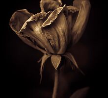 Nutella coated flower by alan shapiro