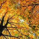 autumn sky by hannes cmarits