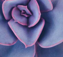 Purple Pearl Sticker