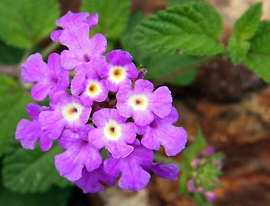 Tiny Purple Lantana by Linda  Makiej