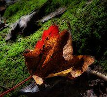 Fall Again! by vigor