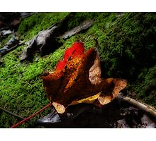 Fall Again! Photographic Print