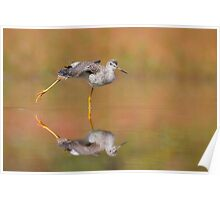 Another Autumn Greater Yellowlegs. Poster