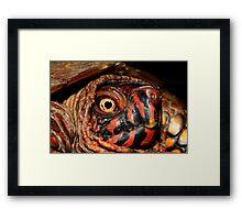 Darth Maul Turtle Framed Print