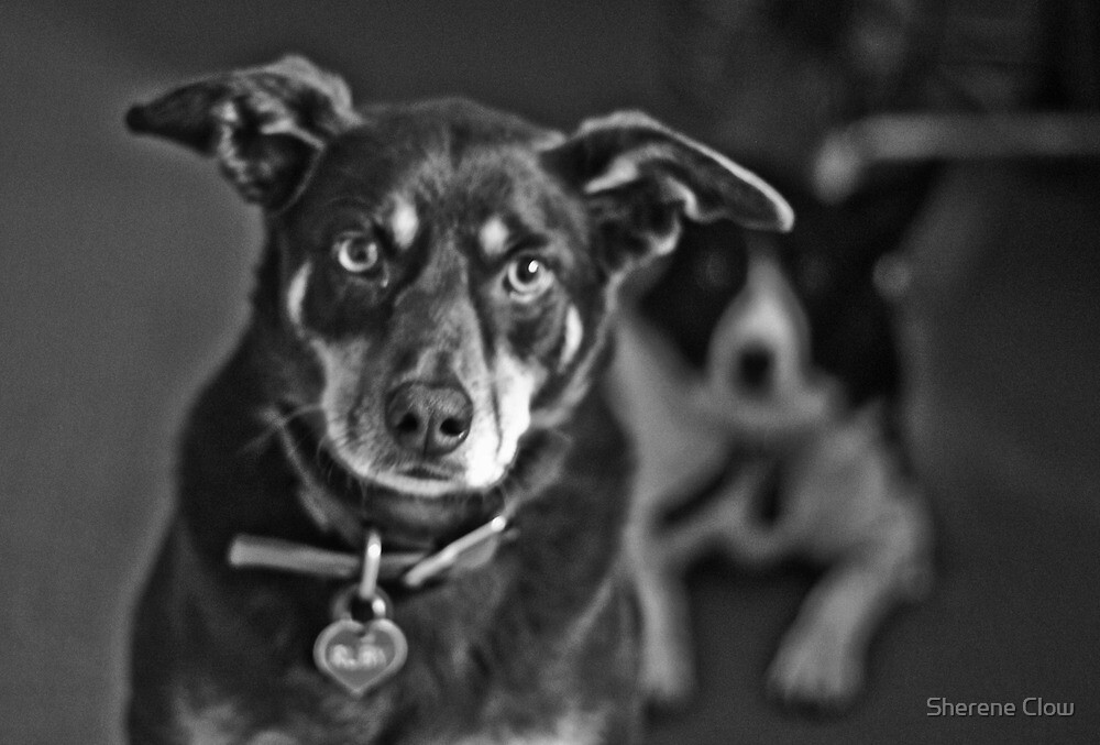 Black and White of Dark Brown and Tan and a Black and White by Sherene Clow