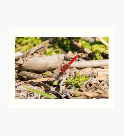 Trying to blend in, dragonfly, Lago Trasimeno, Umbria Art Print