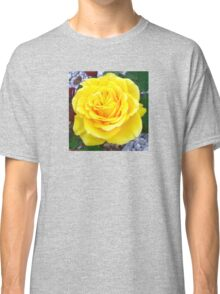 Golden Yellow Rose with Garden Background Classic T-Shirt