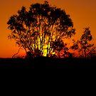 Golden Glow by JimMcleod