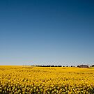 The Canola House by S T