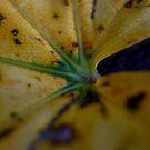 Leaf by Amanda Reed