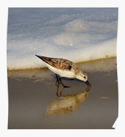 Beach Bird Poster