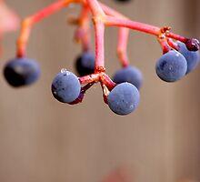 Fall Grapes by Karen Jayne Yousse
